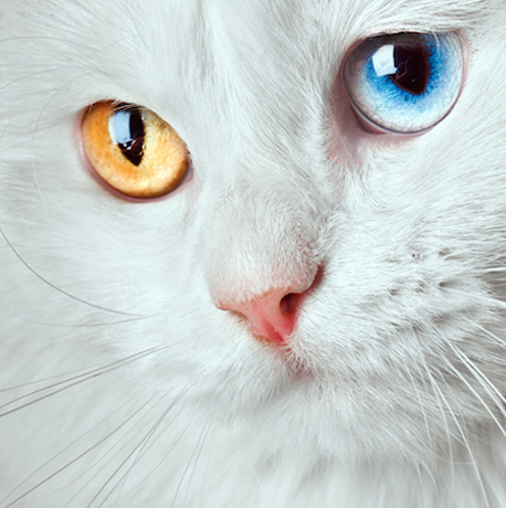 chatyeux